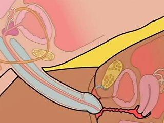 Orgasm Sex How To Insert Penis In Vagina